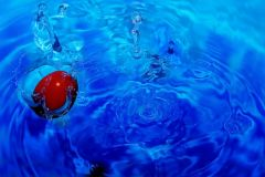 Blue Water, Red Tomato.