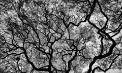 Under a canopy of invisible leaves