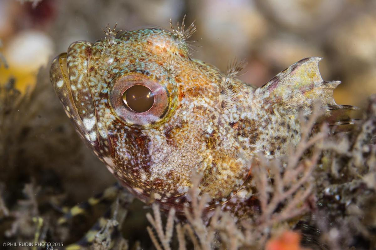 First Underwater Shots with Sony FE 90mm F/2.8 macro